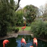Flamingos of Paradise Park